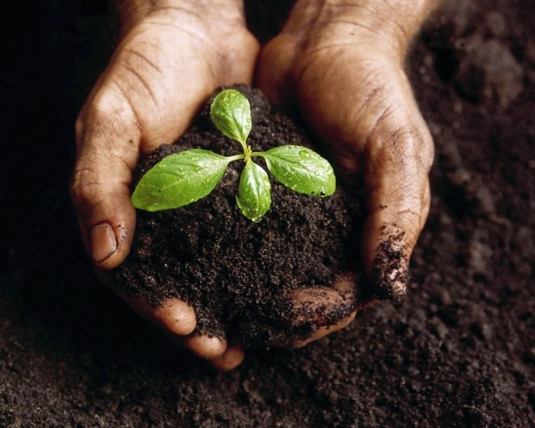 seedlingr